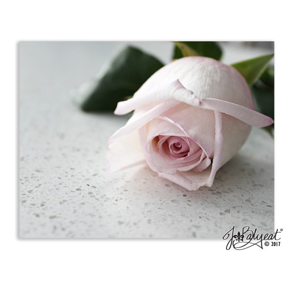 Rose Note Cards